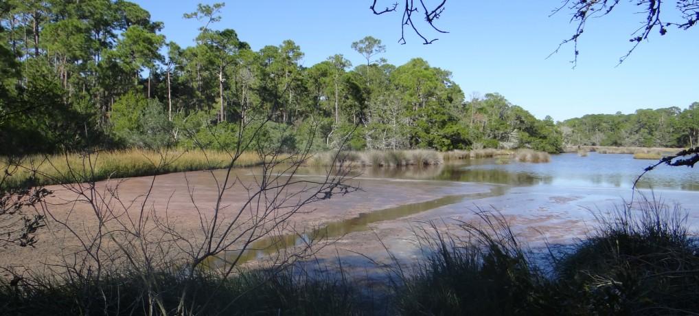 "Salt Marsh Restoration:  A pond called ""stinky pinky"""
