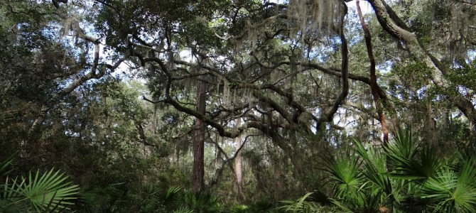 Environmental Stressors, Land Use Legacies, and Georgia's Iconic Maritime Forests
